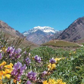 visitar Mendoza en primavera