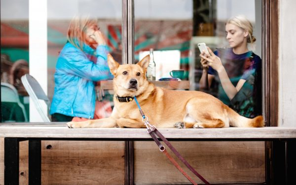 5 Restaurantes Pet Friendly en Buenos Aires