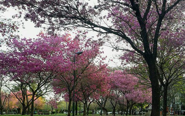 Qué hacer en Rosario durante la primavera